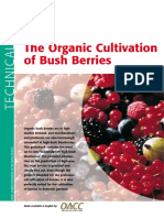 Bush Berries