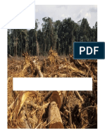Deforestation Cover Page