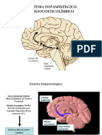 Adiccion / Neuropsicología