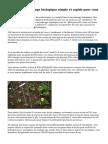 Conseils de jardinage biologique simple et rapide pour vous