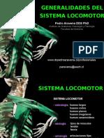 General Locomotor Anatomy