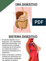 Salud Fisica Unidad 7 Sistema Digestivo
