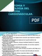 Anatomia y Fisiologia Del Aparato Cardiovascular