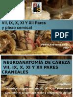 Anatomia Facial Glosofaringeo Vago Accesorio Hipogloso plexo cervical