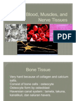 Bone, Blood, Muscles, And Nerve