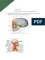 Brain Haematoma