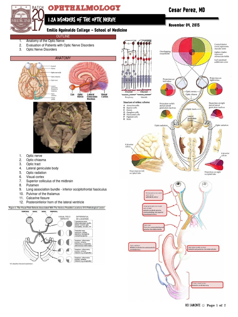 1.2a Disorders of the Optic Nerve | Peripheral Neuropathy ...