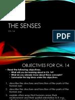 ch 14 1 sensory receptors