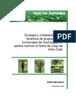 ecologia y modelacion de la dinamica de grupos morfo-funcionales de macroalgas en pastos marinos al Norte de Ciego de Ávila, Cuba