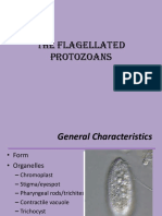 The Flagellated Protozoans