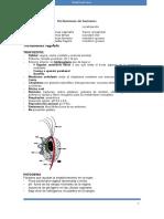 Clase 5. Trichomonas Vaginalis