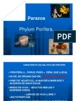PORIFEROS1