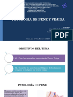 Patologia de Pene y Vejiga