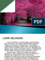 PPT METABOLISME.ppt
