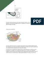 Células Procariotas y Virus