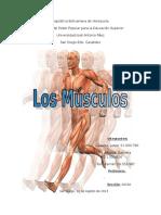 Trabajo de Musculos