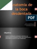 Anatomia de La Boca Desdentada