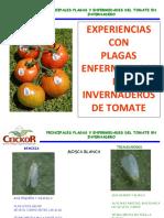 Platica_CEICOR