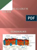 bakteri glikokaliks