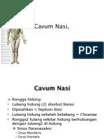 Cavum Nasi