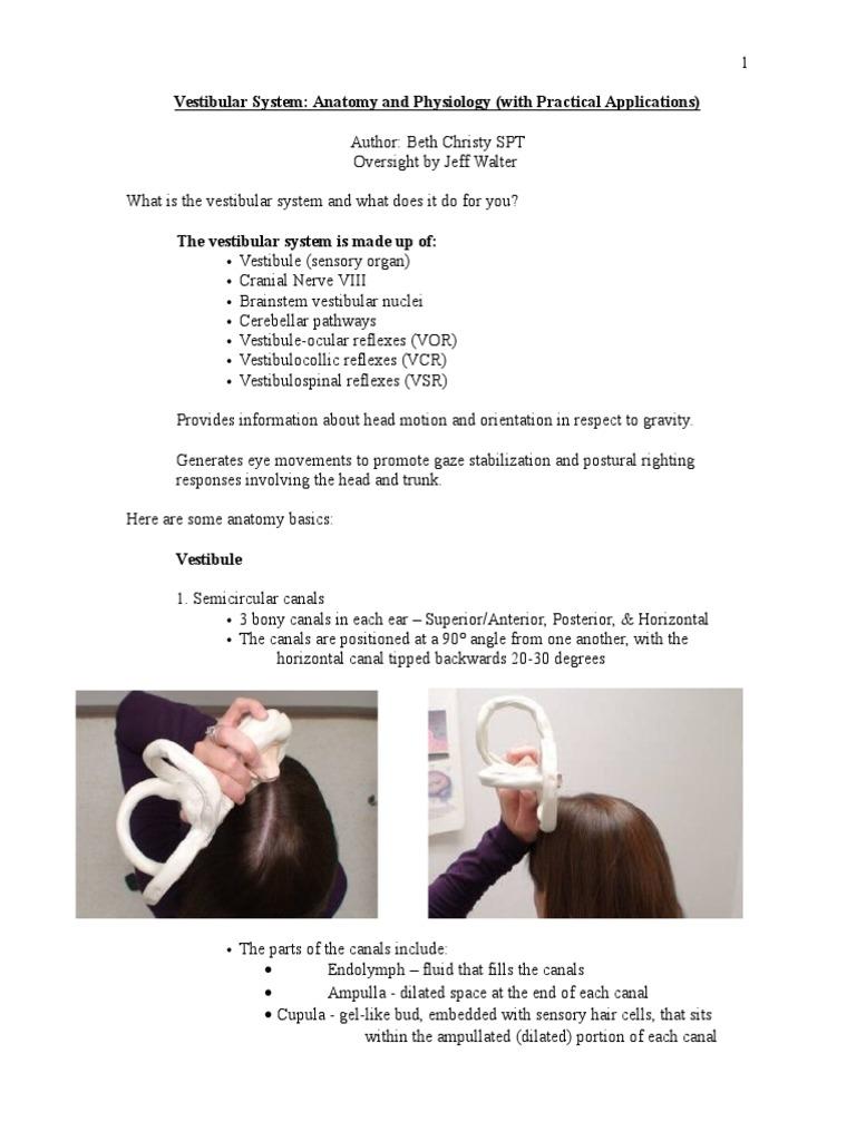 Magnífico Vestibular Anatomy And Physiology Motivo - Imágenes de ...