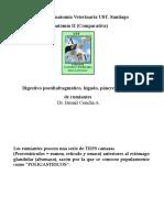 009 Dig Postdiafrag Rumiantes