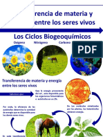 Importancia de Los Ciclos Biogeoquimicos