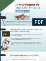manejo de la mordedura de perro en Atención Primaria
