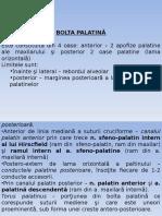 Bolta Palatina Fosa Zigomatica Infratemporala Pterigomaxilara Orbita 1