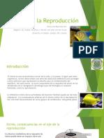 Estrés en La Reproducción de peces