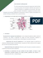 ED1 - Fisiologia Cardiovascular Para Fono (RESPOSTAS)