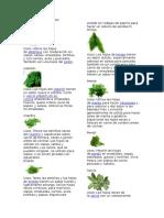 10 Hierbas comestibles.docx