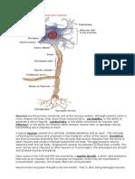 Neuro Study Guide