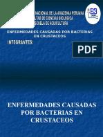 Bacterias en Crustaceos
