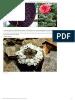 22 especies vegetales geométricas