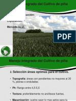 Biblioteca_281_Manejo Integrado Del Cultivo de Piña