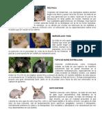 Animales y Plantas Raros
