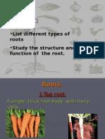 rootsstructureandfunction
