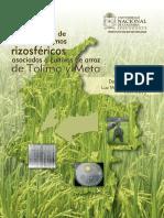 Ecologia de Microorganismos Rizosfericos Unal