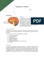 Hipotalamo e Hipofisis2