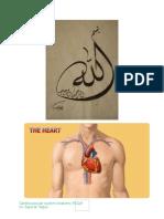 126523849 Cardiovascular System Anatomy Mcqs