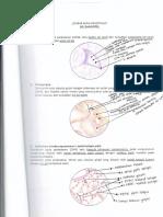 buku kerja patofisiologi.pdf