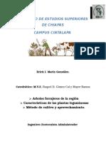 Arboles Forrajeros de La Región