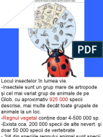 1. Morf ext a insect