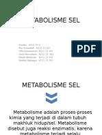 Metabolisme Sel ulfa