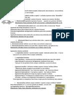 3.1 Anatomia Del Tronco