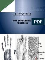 Lofoscopia y Sus Diferentes Regiones