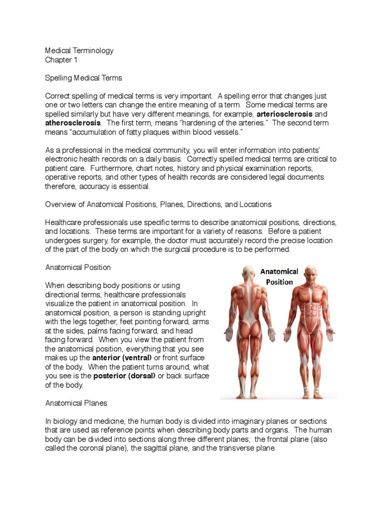 Overview of Anatomical Positions   Anatomical Terms Of Location ...