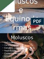 Equinodermas e Moluscos