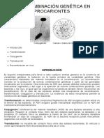 19-La Recombinación Genética en Procariontes
